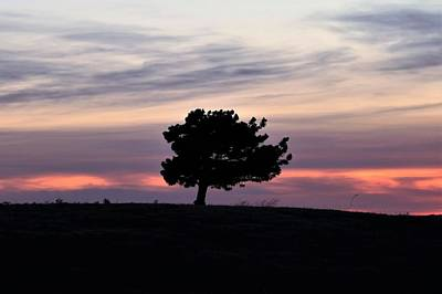 Photograph - Lonely Little Pine At Sunset by Sheila Brown