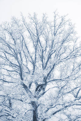 Photograph - lonely Oak tree in snowy, misty landscape by Christian Lagereek