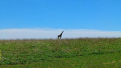 Photograph - Lonely Plain by Bob Shimer