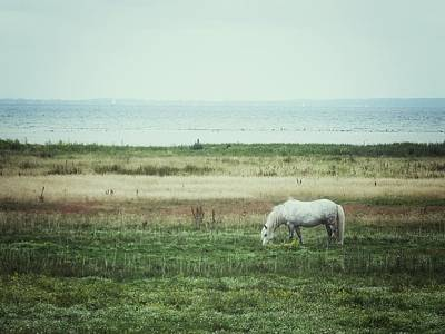 Lonely Pony Art Print by Karen Stahlros