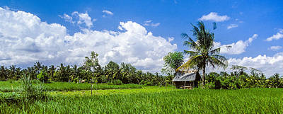 Photograph - Lonely Rice Hut by T Brian Jones