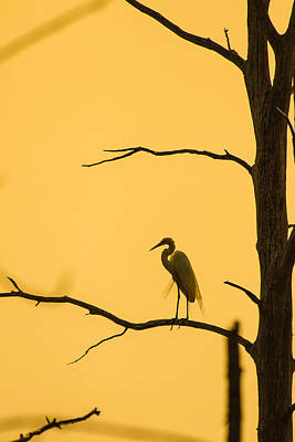 Photograph - Lonely Silhouette by Pierre Cornay