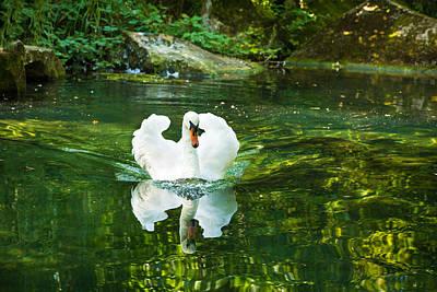 Photograph - Lonely Swan by Natalia Otrakovskaya