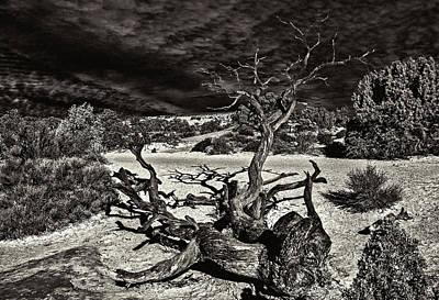 Lonely Tree #4  Art Print by Alex Galkin