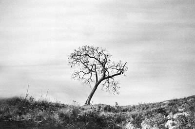 Photograph - Lonely Tree by Amarildo Correa