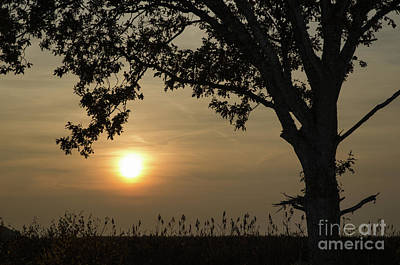 Photograph - Lonely Tree At Sunset by Kennerth and Birgitta Kullman