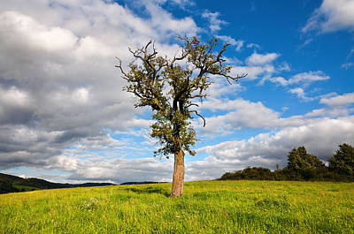 Photograph - Lonely Tree by Bjorn Burton