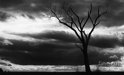 Photograph - Lonely Tree In Monochrome by Ricky L Jones
