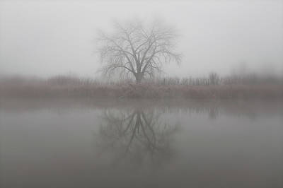 Photograph - Lonely Tree In The Fog by Tony Hake