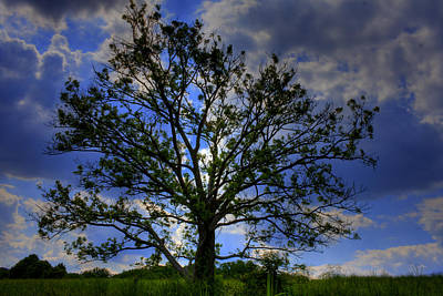 Kevin Hill Photograph - Lonely Tree by Kevin Hill