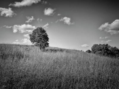 Photograph - Lonely Tree Landscape Black And White Photography by Ann Powell