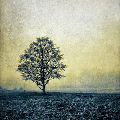 Art Print featuring the photograph Lonely Tree by Marion McCristall