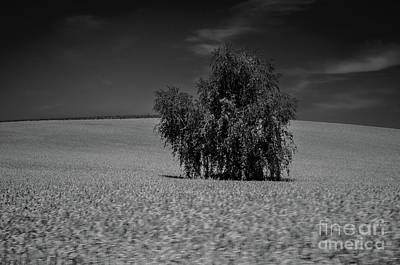 Photograph - Lonely Tree by Michelle Meenawong