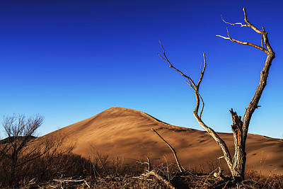 Photograph - Lonely Bare Tree And Sanddunes by Vishwanath Bhat
