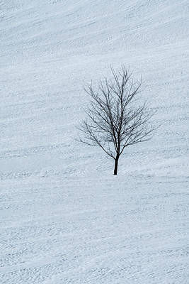 Photograph - Lonely Tree by Tom Singleton