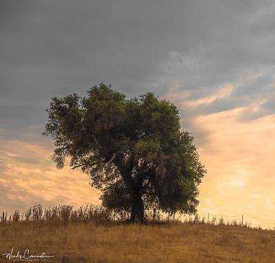 Photograph - Lonely Tree by Wendy Carrington