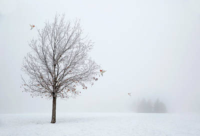Photograph - Lonely Winter As The Birds Return by Georgiana Romanovna