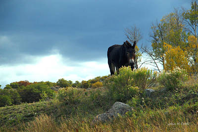 Photograph - Lonesome Donkey by John H Foote