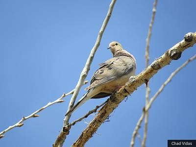 Lonesome Dove Original
