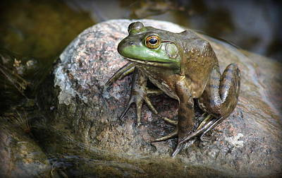 Photograph - Lonesome Frog by Rosanne Jordan