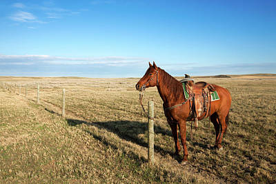 Barbed Wire Fence Photograph - Lonesome Horse by Todd Klassy