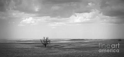 Photograph - Lonesome Oak by Nadalyn Larsen