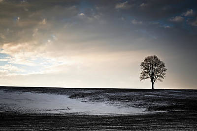 Photograph - Lonesome Tree On A Hill IIi by David Sutton