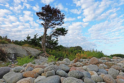 Photograph - Long Beach Tree Gloucester Ma by Toby McGuire