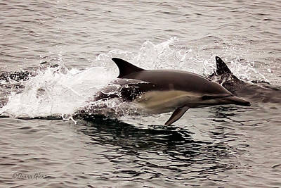 Photograph - Long Beaked Common Dolphin Jumping by Deana Glenz
