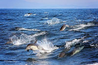 Photograph - Long Beaked Common Dolphin Pod by Deana Glenz