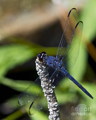 Photograph - Long Blue by Ken Frischkorn