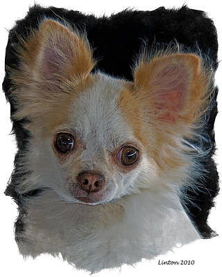 Breed Digital Art - Long Coat Chihuahua by Larry Linton