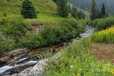 Photograph - Long Creek Wildflowers by Idaho Scenic Images Linda Lantzy