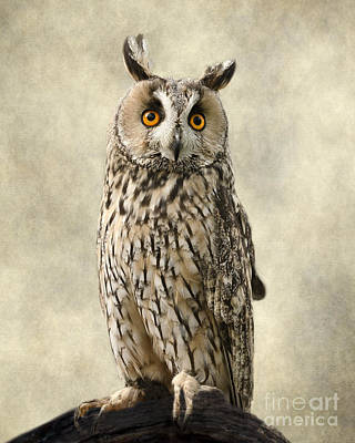 Vintage Baseball Players - Long Eared Owl by Linsey Williams