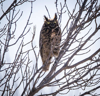 Wild Weather - Great Horned Owl  by Ricky L Jones