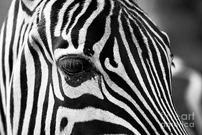 Photograph - Long Eyelashes by The Art of Alice Terrill