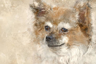 Long Hair Chihuahua Watercolor Art Print