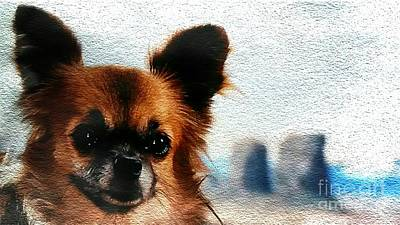 Photograph - Long-haired Chihuahua by Maria Urso