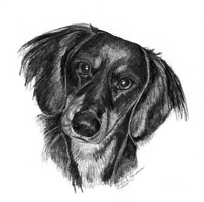 Dachshund Drawing - Long-haired Dachshund by Deb Gardner