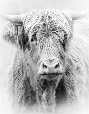 Photograph - Long Haired Highland Cow by Athena Mckinzie