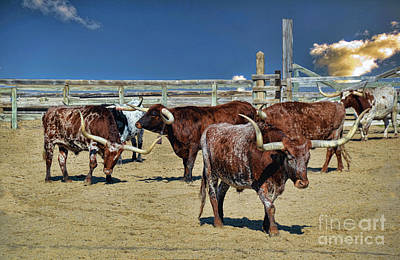 Photograph - Long Horn Round Up by Diana Mary Sharpton