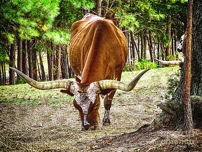 Photograph - Long Horn Steer by Melissa Messick