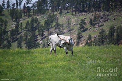 Photograph - Long Horn by Susan Herber