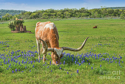 Cattle Photograph - Long Horns In Wildflowers by Tod and Cynthia Grubbs