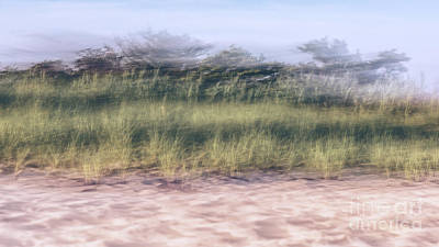Photograph - Long Island Beach Grass by Alissa Beth Photography