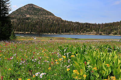 Long Lake Wildflowers Print by Brett Pelletier