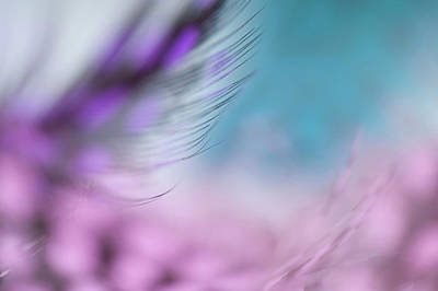 Photograph - Long Lashes. Angels Flight Series by Jenny Rainbow