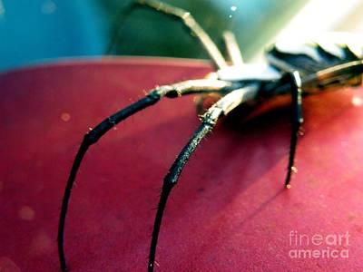 Photograph - Long Legs by Christy Ricafrente