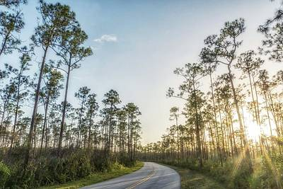 Photograph - Long Pine Key by Framing Places