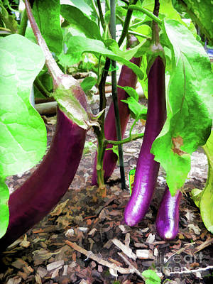 Painting - Long Purple Eggplant by Lanjee Chee